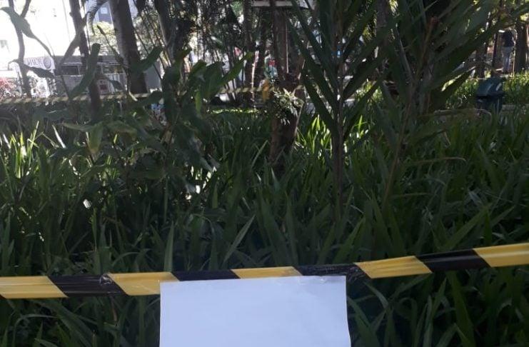 [Criciúma: Filhote de coruja na Praça Nereu Ramos]